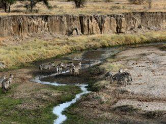 Parc national de Tarangire, Tanzanie.